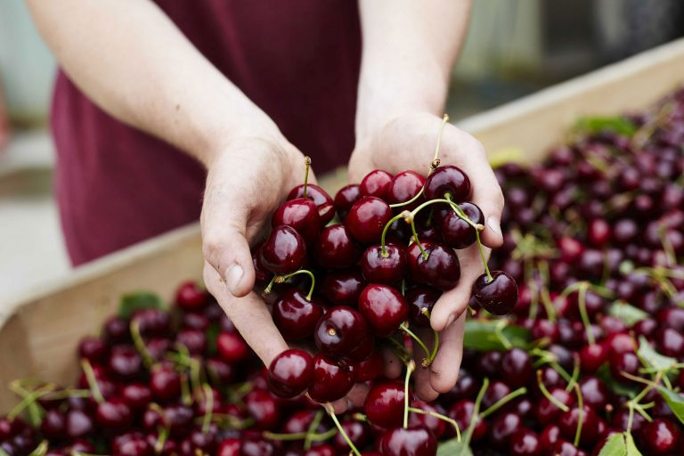 Yarra Valley Cherries – Ecommerce (Food Producer)